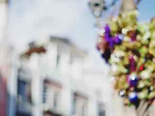近くの花のアップ - No.914722
