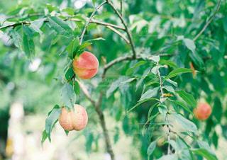 庭の植物の写真・画像素材[927716]