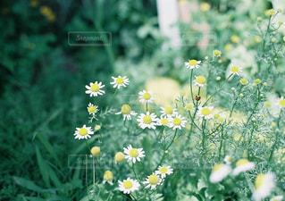 近くのフラワー ガーデンの写真・画像素材[1235183]