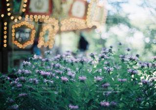 近くの花のアップの写真・画像素材[1235201]