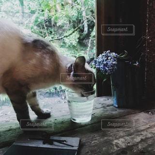 お水を飲みにきた猫の写真・画像素材[1260079]