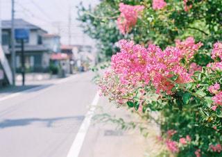 花の写真・画像素材[1434547]