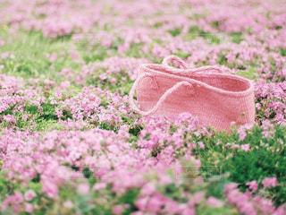 花,ピンク,flower,ピンク色,桃色,pink,知多半島,レンゲ,カゴ,サイザルカゴ