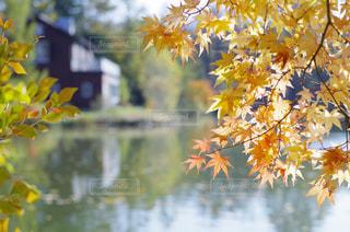 ツリーに黄色い花の写真・画像素材[1601143]