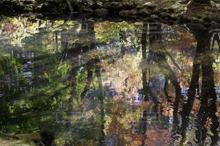 近くに池のアップの写真・画像素材[1601158]