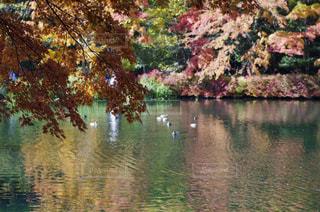 自然,秋,紅葉,屋外,軽井沢,雲場池,長野県,10月,モミジ