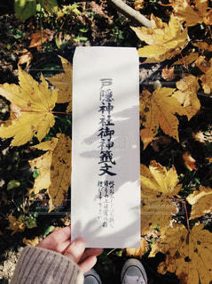 自然,秋,紅葉,長野県,おみくじ,11月,戸隠,戸隠神社奥社