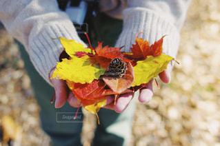 秋をお持ち帰りの写真・画像素材[1602048]