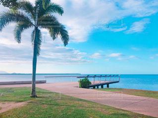 ヤシの木と水の体を持つビーチ - No.719617