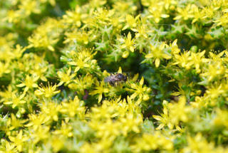 自然,花,屋外,植物,黄色,蜂,虫,イエロー,草木,ガーデン