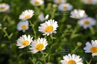 自然,花,屋外,植物,黄色,イエロー,草木,ガーデン