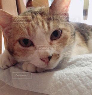 ベッドの上で横になっている猫 - No.721338