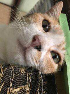 近くに猫のアップ - No.721341