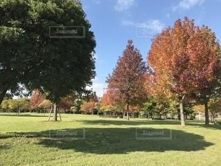 公園の木 - No.842928