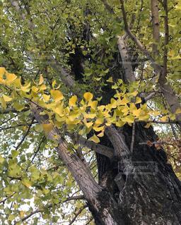 近くの木のアップ - No.872971