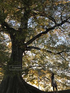 近くの木のアップの写真・画像素材[886188]
