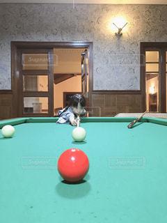 緑の部屋でホッケー選手の写真・画像素材[1218894]