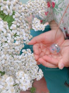 花の写真・画像素材[1237369]