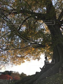 空,秋,木,夕焼け,女の子,丘,樹,姫路,大樹,秋空,ムクノキ