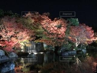 自然,秋,夜,紅葉,もみじ,観光,ライトアップ,姫路,兵庫県,好古園