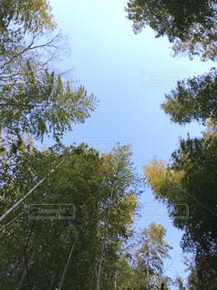 近くの木のアップの写真・画像素材[1869630]
