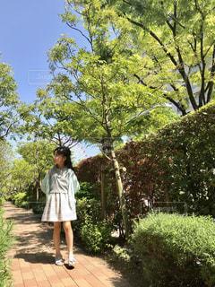 自然,木,屋外,晴れ,晴天,散歩,女の子,外,小学生,神戸,お散歩
