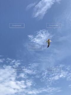 曇りの日に凧を飛ばす人の写真・画像素材[2416721]