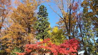 森の大きな木 - No.885420