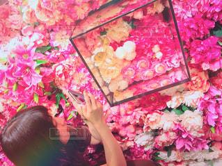 ピンクの花のグループの写真・画像素材[1799250]