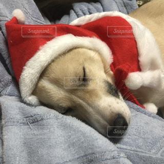 犬,部屋,室内,わんこ,のんびり,サンタさん