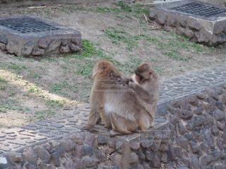 岩の上に座っている猿の写真・画像素材[724299]