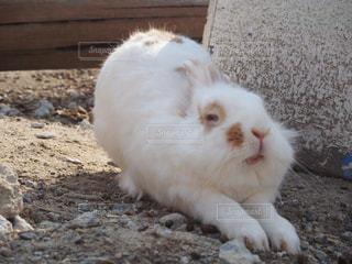 茶色と白の動物の写真・画像素材[724304]