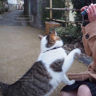 猫のふれあい人の写真・画像素材[724306]