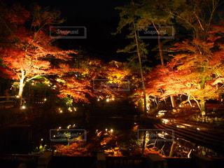夜の街の景色の写真・画像素材[854811]