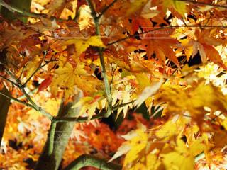近くの木のアップの写真・画像素材[854830]
