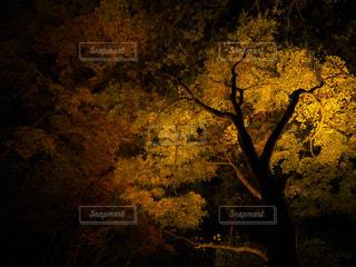 暗闇の中のツリーの写真・画像素材[854833]