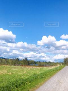 初夏の散歩道の写真・画像素材[3141596]