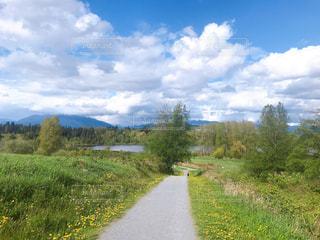 春の散歩道の写真・画像素材[3141594]