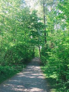 緑のトンネルの写真・画像素材[3174524]