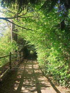 緑のトンネルの写真・画像素材[3174526]