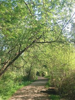 緑のトンネルの写真・画像素材[3174525]