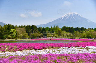 春の富士山 - No.842335