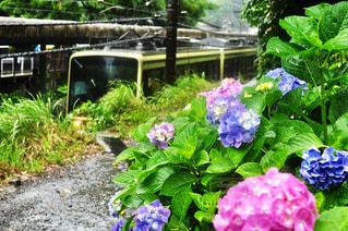 近くのフラワー ガーデンの写真・画像素材[1122066]