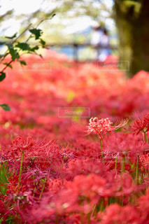 近くの花のアップの写真・画像素材[1122525]