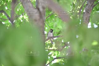 木の枝にとまる小鳥の写真・画像素材[1157896]