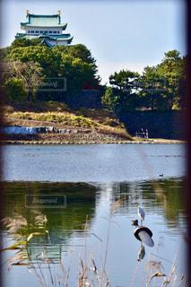 水の体の上に鳥立ちの写真・画像素材[1217059]