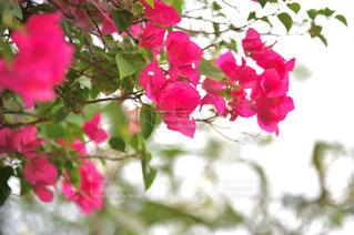 近くの花のアップの写真・画像素材[1402383]