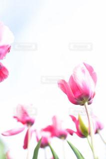 ピンクの花で一杯の花瓶の写真・画像素材[1434279]