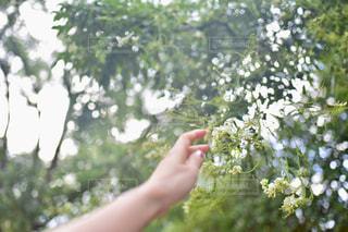 自然,花,森林,屋外,東京,植物,白,手,樹木,人物,人,青山,ホワイト,草木,ガーデン