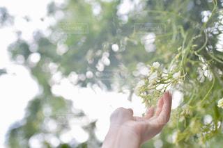 女性,自然,花,森林,屋外,東京,植物,白,手,樹木,人物,人,青山,ホワイト,草木,ガーデン